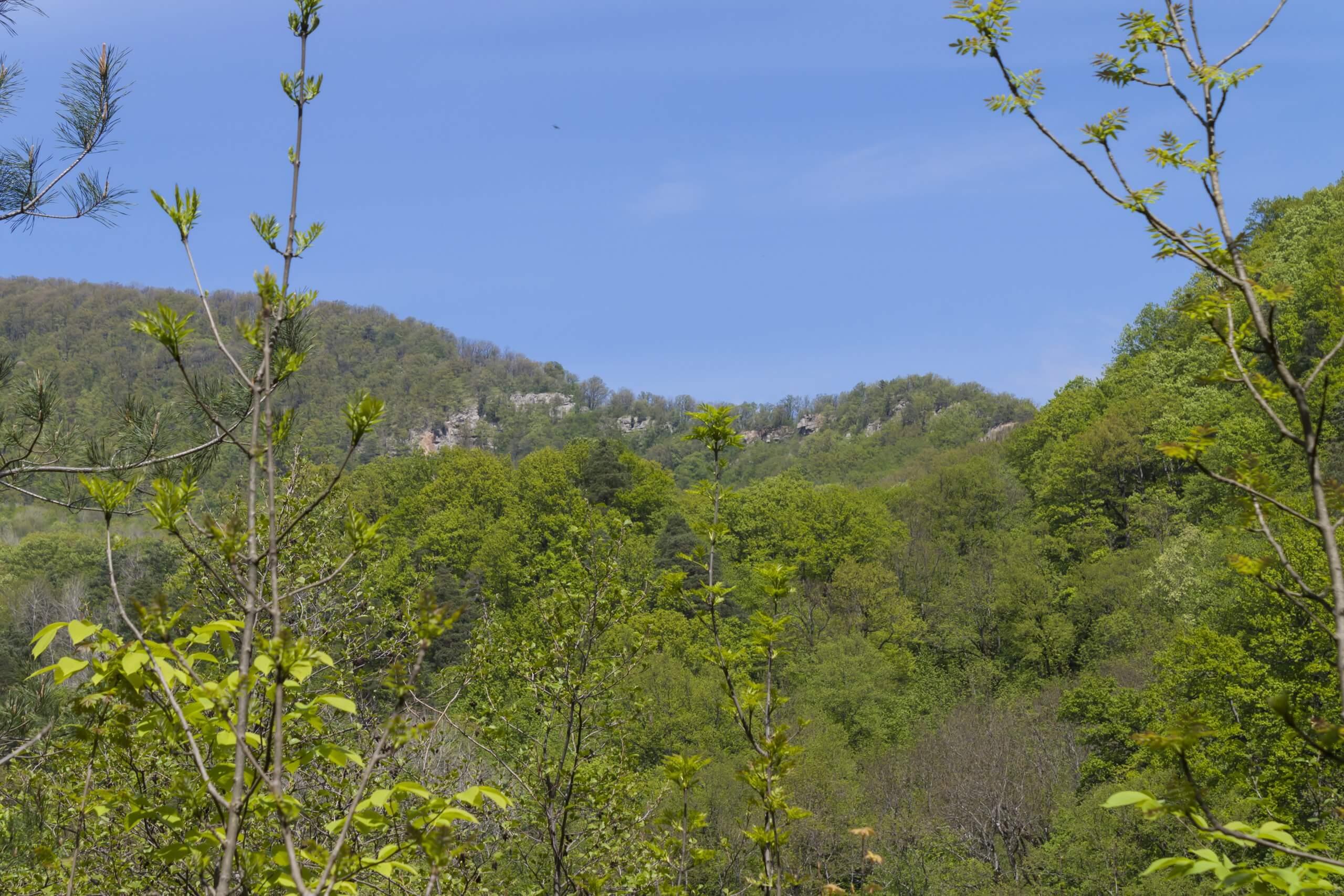 Вид на Красные (Наумовские) скалы