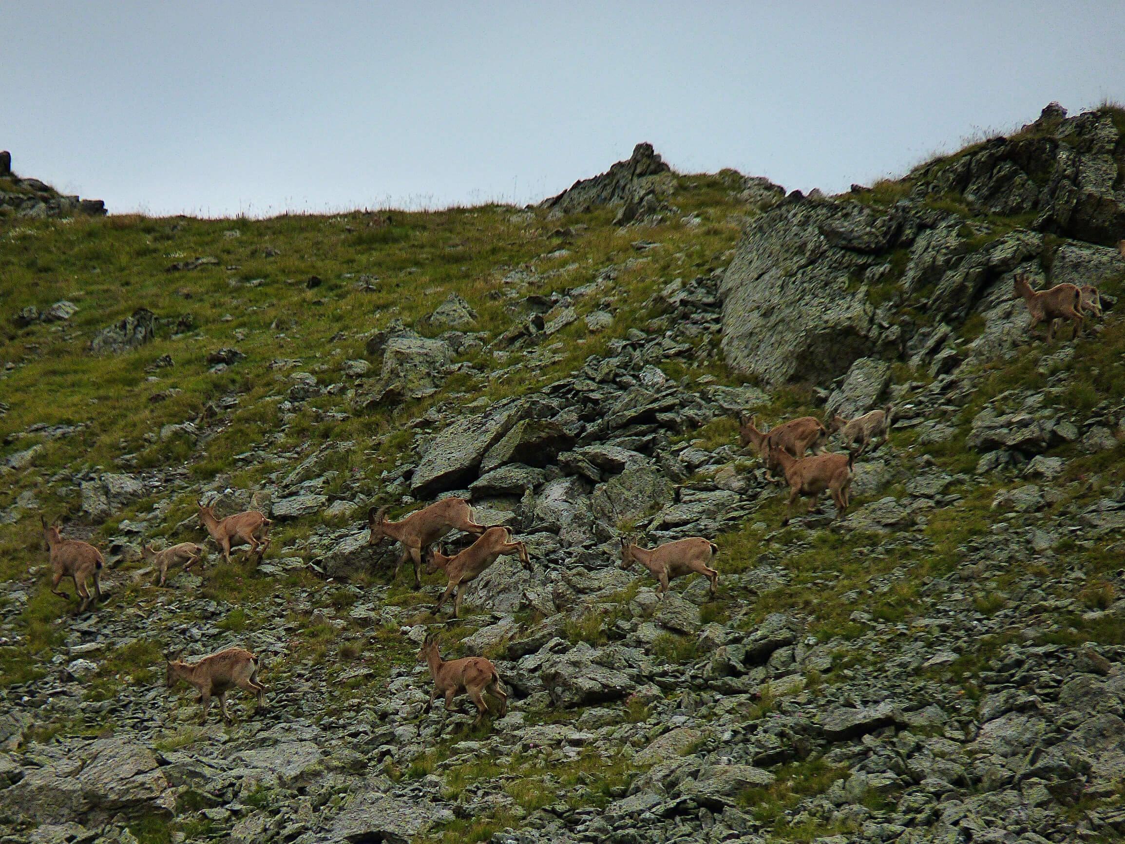 Туры на склоне горы Уруп