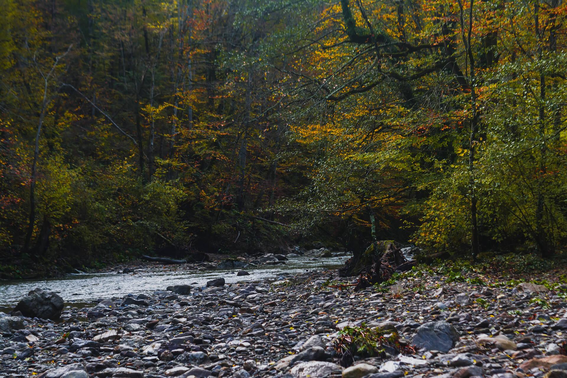 Русло реки Чепси