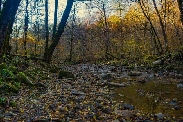 Русло реки Грязная
