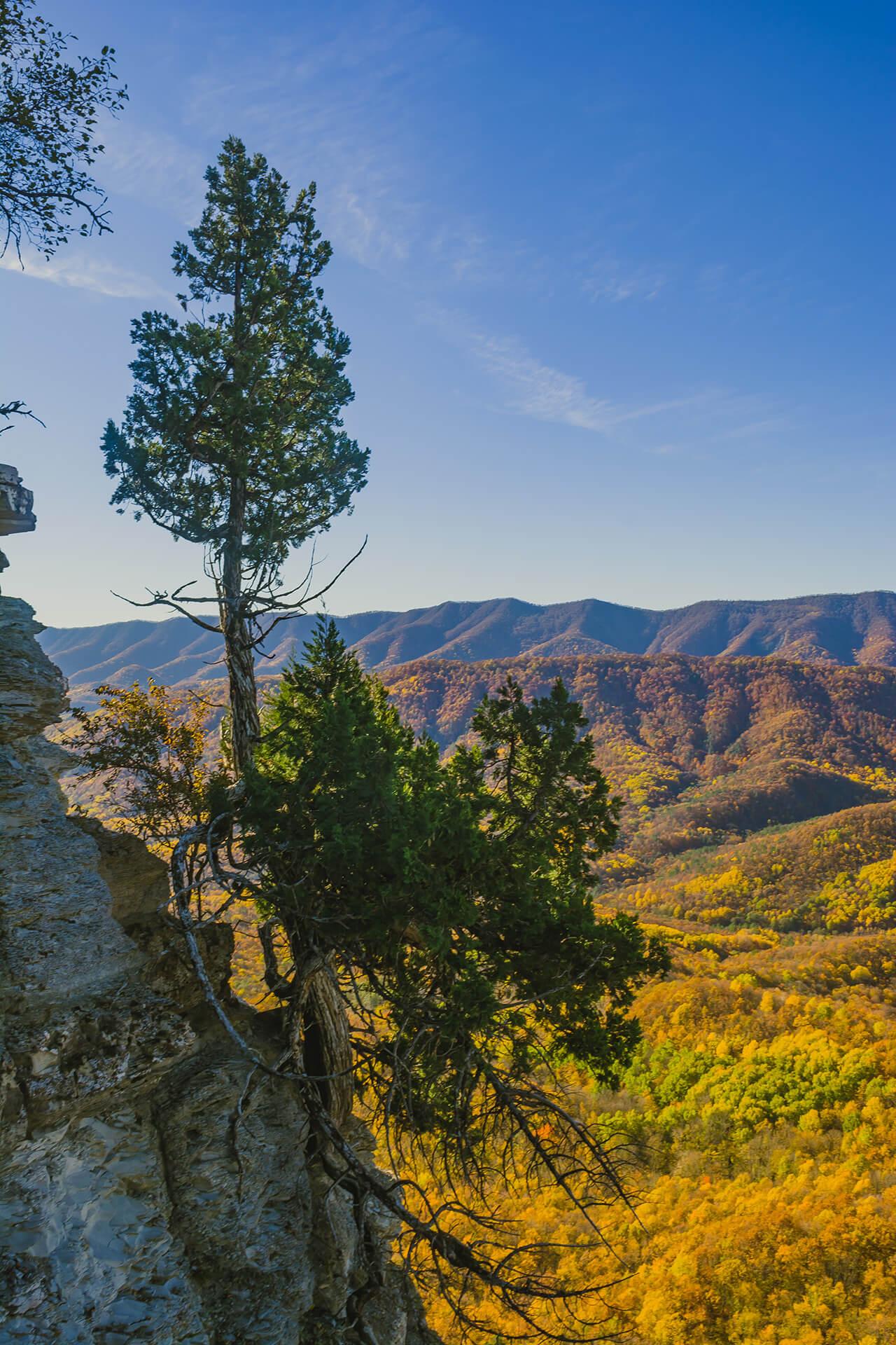 Сосна на склоне горы Папай